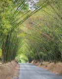 Viale con la strada e gli alberi del bambù Immagine Stock Libera da Diritti