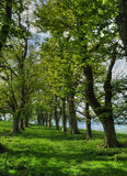 Viale degli alberi Fotografie Stock