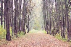 Viale degli alberi Immagini Stock Libere da Diritti