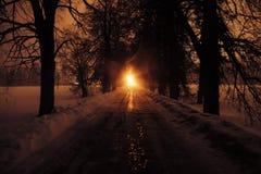 Viale degli alberi alla notte Immagini Stock