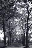 Viale degli alberi del terreno boscoso Immagini Stock Libere da Diritti