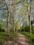 Viale degli alberi nella primavera Immagine Stock Libera da Diritti