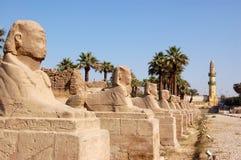 Viale degli Sphinxes, Luxor Immagine Stock Libera da Diritti
