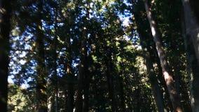 Viale del cedro di Suginami; Suginami Cedar Avenue a Nikko video d archivio