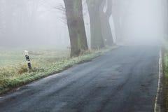 Viale dell'albero con la strada nella nebbia - parco nazionale di Elbtalaue sull'Elba Germania Immagini Stock