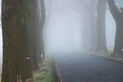 Viale dell'albero con la strada nella nebbia - parco nazionale di Elbtalaue sull'Elba Germania immagine stock