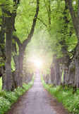 Viale dell'albero con mystically leggero all'estremità Fotografia Stock