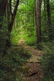 Viale della foresta con il piccolo ponte di legno Fotografia Stock