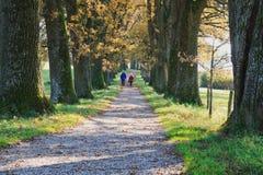 Viale della quercia in autunno immagine stock