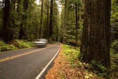 Viale della sequoia Immagine Stock