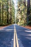 Viale della sequoia Fotografia Stock