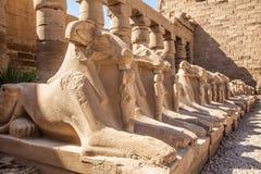 Viale delle Sfingi dalla testa RAM Tempiale di Karnak Fotografia Stock Libera da Diritti