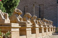 Viale delle Sfingi dalla testa RAM in un tempio di Karnak Luxor, Egitto immagine stock libera da diritti
