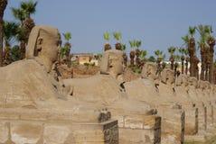 Viale dello Sphinx Immagini Stock Libere da Diritti