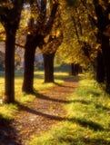 Viale di autunno Immagine Stock