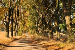 Viale di autunno Immagini Stock Libere da Diritti