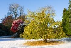 Viale di autunno Fotografia Stock