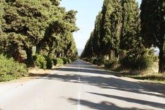 Viale di Bolgheri royaltyfria bilder
