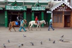 Viale di Darjeeling Immagini Stock Libere da Diritti
