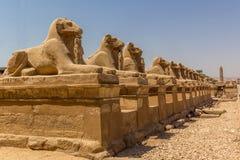 Viale di Luxor Immagini Stock