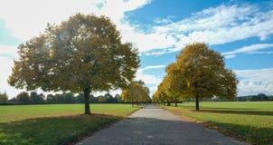 Viale di sera di autunno degli alberi nel parco, con un cielo adorabile Immagini Stock Libere da Diritti