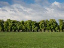 Viale di vecchi alberi nella primavera Immagini Stock Libere da Diritti
