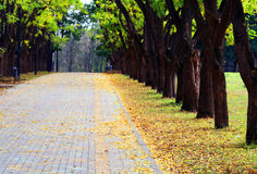 Viale nella sosta della città in autunno immagini stock