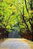 Viale nella sosta della città in autunno fotografia stock