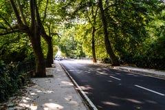 Viale - strada con la linea di alberi nella città di Yalova - la Turchia Immagine Stock