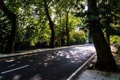 Viale - strada con la linea di alberi nella città di Yalova - la Turchia Fotografia Stock