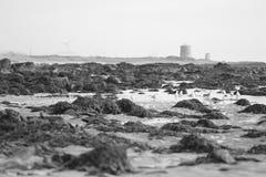 Viana do Castelo coastline. Seagulls on Viana do Castelo coastline, Portugal (black and white photo stock photography