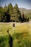 Viandante che Backpacking sulla traccia di montagna Fotografia Stock Libera da Diritti