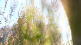 Viandante che cammina all'aperto, fine di angolo basso su del piede archivi video