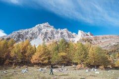 Viandante che cammina su una valle variopinta con la grande vista panoramica ed i colori vivi autunnali Colpo grandangolare nelle Immagini Stock