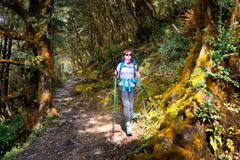 Viandante con la passeggiata dello zaino sulla traccia di montagna in foresta Fotografia Stock