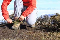 Viandante della donna che lega laccetto di escursione degli stivali sul picco di montagna Immagini Stock