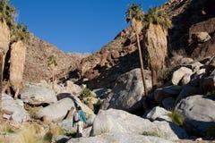 Viandante nelle montagne del deserto Immagini Stock