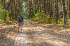 Viandante sola che cammina sulla strada sabbiosa in foresta di conifere Immagini Stock