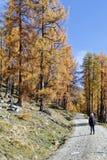 Viandante sulla strada non asfaltata nella foresta della montagna Immagini Stock