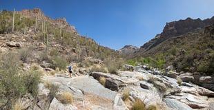 Viandante sulla traccia del canyon dell'orso. Fotografia Stock
