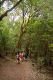 Viandanti che camminano nella foresta dell'alloro in La Gomera immagine stock