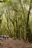 Viandanti che camminano nella La Gomera di Garajonay del parco nazionale immagine stock