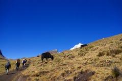 Viandanti nelle alte Ande Fotografia Stock Libera da Diritti