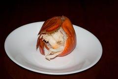 Viande de queue de homard Image libre de droits