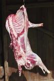 Viande rouge crue d'agneau sur un crochet Image stock