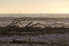 Viareggiostrand na overzees onweer in de wintertijd royalty-vrije stock foto