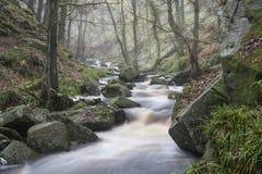 Vibra d'or traversant de courant de paysage de forêt d'Autumn Fall Photographie stock