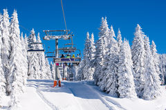 Vibrant active people winter image with skiers on ski lift, snow pine trees, blue sky Royalty Free Stock Photo