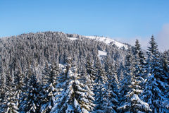 Vibrant aerial panorama of the slope at ski resort, snow trees, blue sky. Vibrant aerial view panorama of the slope at ski resort, snowy pine trees, blue sky Royalty Free Stock Images