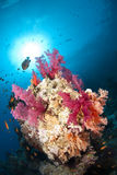 Vibrant And Colourful Tropical Coral Reef Scene. Royalty Free Stock Photos